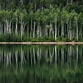 Aspen Reflections by Kris and Sydney Riccella Kitzmiller