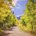 Aspen Road by Priscilla Burgers