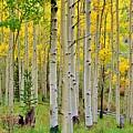 Aspen Slope by Ellen Heaverlo