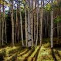 Aspen Sunbeams by Linda Weyers