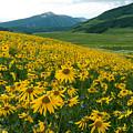 Aspen Sunflower Sunset Landscape by Cascade Colors