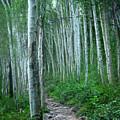 Aspen Trails  by Alisha Jurgens