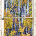 Aspen Tree Magic Cottonwood Pass White Farm House Window Art by James BO Insogna