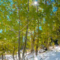 Aspens At Pine Creek Basin by Michele James