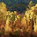 Aspens In Autumn I by Leda Robertson