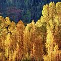 Aspens In Autumn II by Leda Robertson