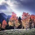 Aspens In Autumn Light by Leland D Howard