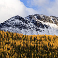 Aspens In Fall Colors by Richard Steinberger