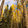 Aspens In Santa Fe 3 by James Gay