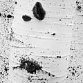Aspens Ir 0707 by Bob Neiman