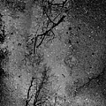 Asphalt-water-tree Abstract Refection 03 by Jor Cop Images