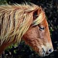 Assateague Horse Sarah's Sweet Tea Right Profile by Assateague Pony Photography
