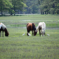 Assateague Island - Wild Ponies And Their Buddies  by Ronald Reid