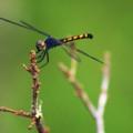 Assateague Island Dragonfly by John Feiser