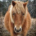Assateague Island Horse Miekes Noelani by Bill Swartwout Fine Art Photography