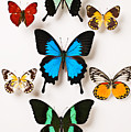 Assorted Butterflies by Garry Gay