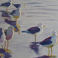 Assorted Gulls by Jenny Armitage