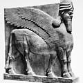 Assyria: Bull Scultpure by Granger