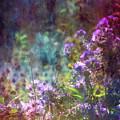 Aster Mist 5079 Idp_2 by Steven Ward