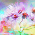 Asters Gone Wild by Anita Pollak