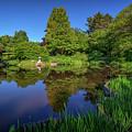 Asticou Azalea Garden by Rick Berk