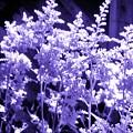 Astilbleflowers In Violet Hue by Debra Lynch