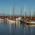 Astoria Marina by Calazone's Flics