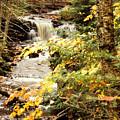 At The Beginning Of Chapel Falls by Amanda Kiplinger