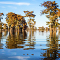 Atchafalaya Swamp 2 Louisiana by Lawrence S Richardson Jr