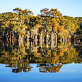 Atchafalaya Swamp 5 Louisiana by Lawrence S Richardson Jr