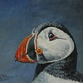 Atlantic Puffin by Bob Williams