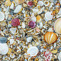 Atlantic' Shells Color by Alex Zabo