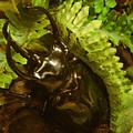 Atlas Beetle by Wendy Fox