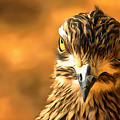 Attitude...with Feathers by Allan Davis
