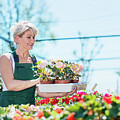 Attractive Gardener Selecting Flowers In A Gardening Center. by Michal Bednarek