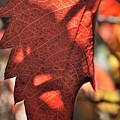 Auburn Autumn by Ron Cline