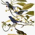 Audubon: Bunting, 1827-38 by Granger
