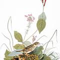 Audubon: Bunting by Granger