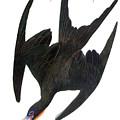 Audubon: Frigatebird by Granger