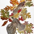 Audubon: Jay by Granger