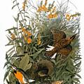 Audubon: Meadowlark by Granger