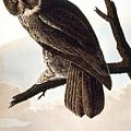Audubon Owl by John James Audubon