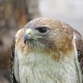Audubon Quality by Chad Vidas