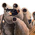 Audubon: Swallow by Granger
