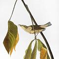 Audubon: Thrush, 1827 by Granger