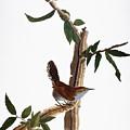 Audubon: Wren, (1827-38) by Granger