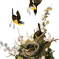 Audubon: Yellow Chat, (1827-38) by Granger