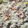 August Bucks by Daniel  Davidson