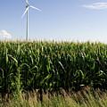 August Corn Turbine by Dylan Punke