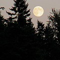 August Full Moon - 1 by Shirley Heyn